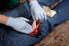 Применение кровоостанавливающей Z-сложенной повязки Celox