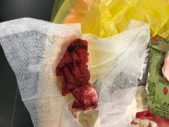 Бинт Celox RAPID после использования на бедренной артерии свиньи